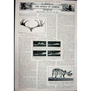 : 1923 ARMOUR SUIT PEMBROKE HELMET ANTLERS IRISH DEER: Home & Kitchen