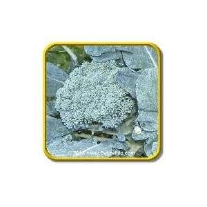 De Cicco   Broccoli Seeds   Jumbo Seed Packet (500