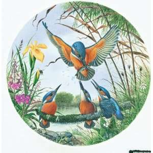 Kingfishers Jigsaw Puzzle 500pc Toys & Games