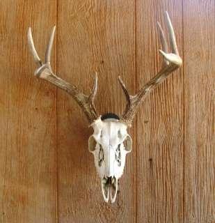 European Mount Skull Hanger for Deer and Wild Boar