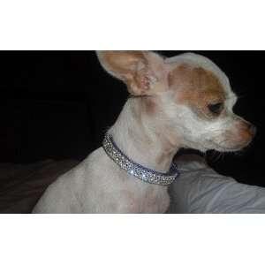 X Small Purple Swarovski crystal dog collar fits 8 10