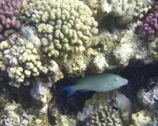 underwater digital camera, IPX8 waterproof, free SD card, burst mode