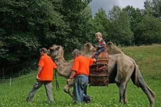 Kamelreiten für Jung und Alt ,Trekingtouren in Sachsen   Leubsdorf