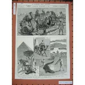 1884 General Gordon Camel Corps Crocodile War Army